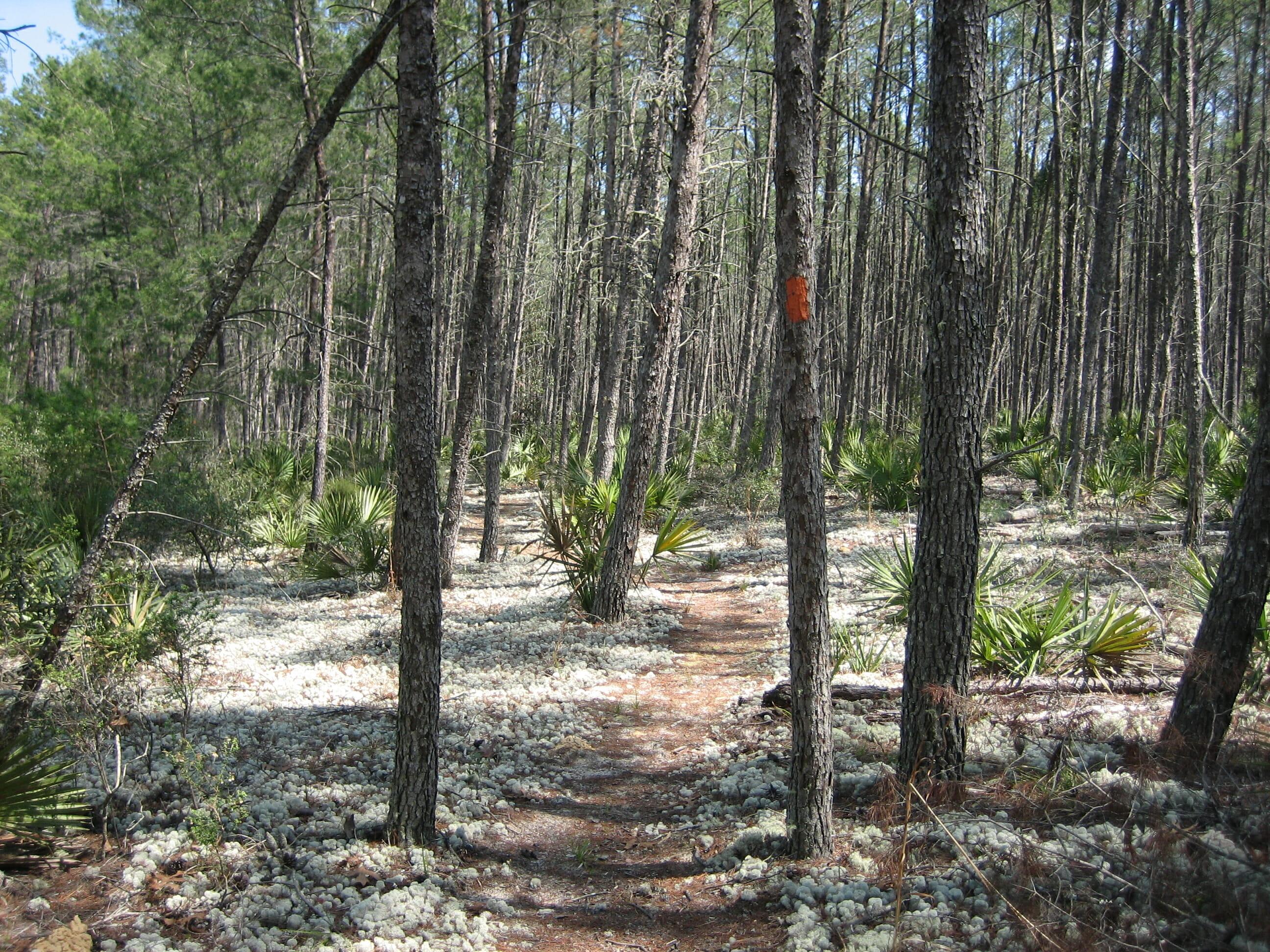 Big Scrub Florida Trail