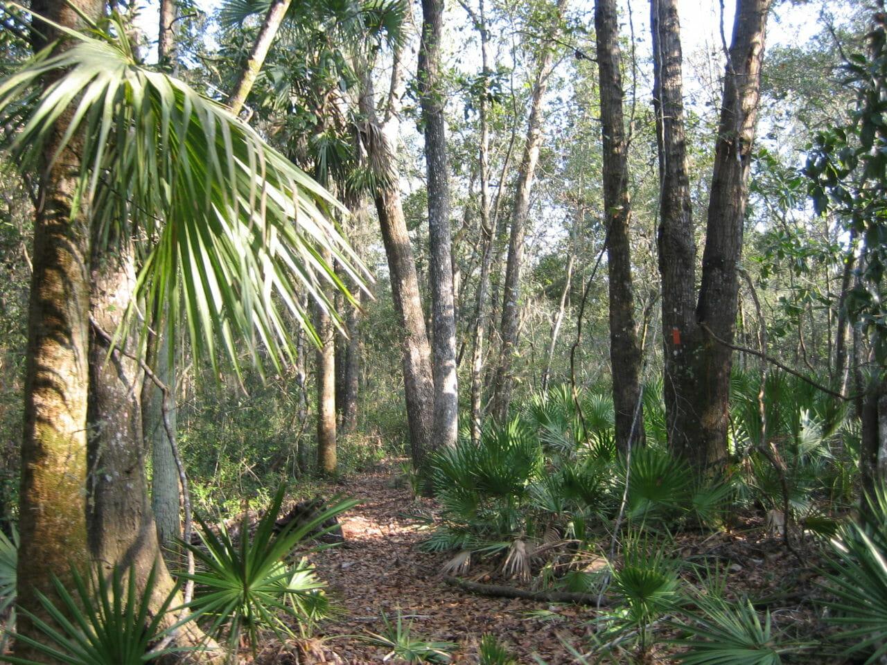 Florida Trail Western Connector
