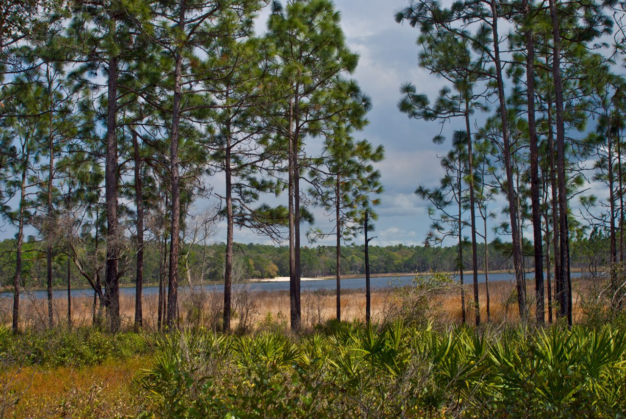 Clearwater Lake in the Ocala National Forest