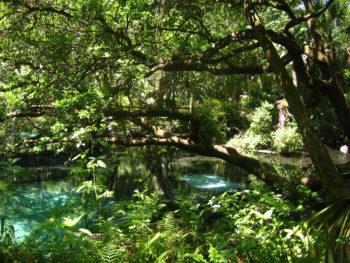 Fern Hammock Springs