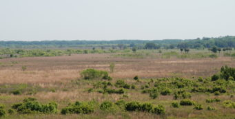Wild horses grazing on the prairie