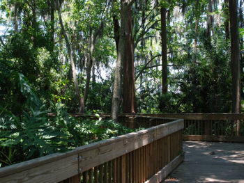 Boardwalk at A.L. Anderson Park