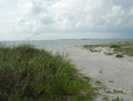 Apollo Beach Nature Preserve