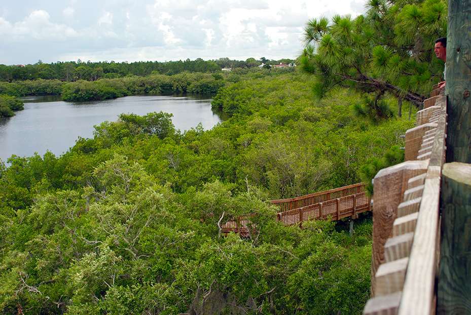 View from the Wall Springs Tower