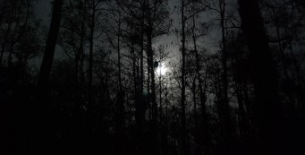 Blue moon Big Cypress