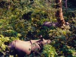 Jungle Fever in Nepal
