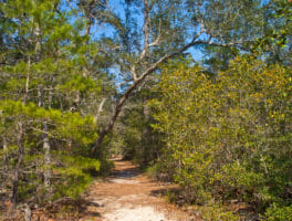 Try Rocky Bayou State Park