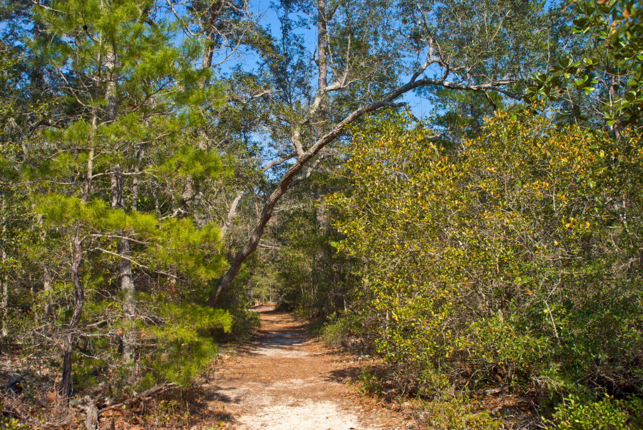 Hiking trail at Rocky Bayou State Park
