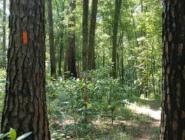 Explore Tallahassee's Phipps Park!