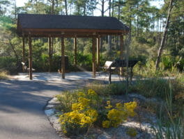 Camp Helen State Park opens new hiking trail