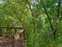 Ocala National Forest debuts new website