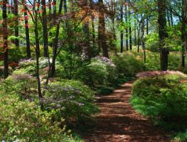 Gracious Gardens of the South