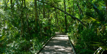 Boardwalk at Churchhouse Hammock