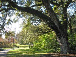 Carl T. Langford Park