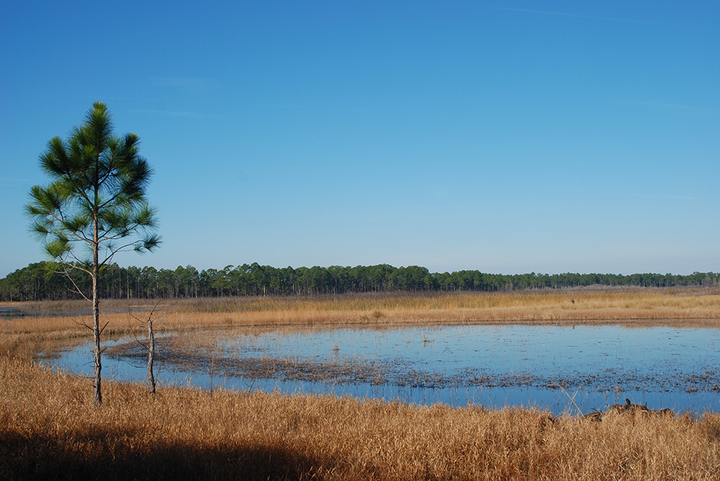 Hopkins Prairie, Ocala National Forest