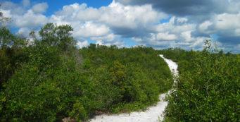 Scrub ridge at Lyonia Preserve, Deltona