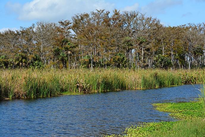 Taylor Creek STA, Okeechobee