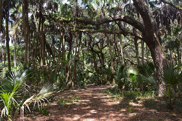 Oak and palm hammock at Starvation Slough