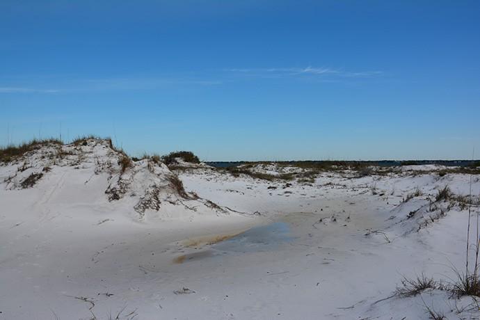 Windswept dunes at UWF Dunes Preserve, Pensacola Beach