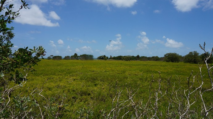 Coastal prairie at Flamingo, Everglades National Park