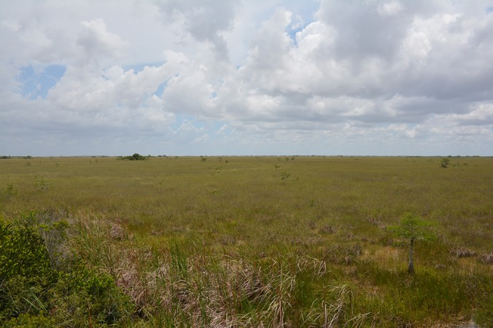 The vast marl prairie of the Everglades