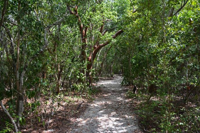 Tropical hardwood hammock at Windley Key