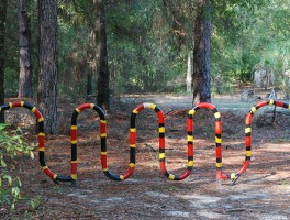 Clever bike rack in Gainesville showing coral snake vs. king snake colors