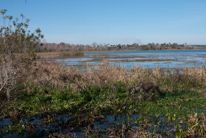 Marshes at Oakland Nature Preserve