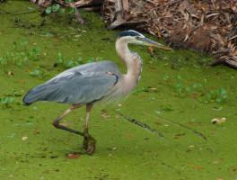 Birding in Florida