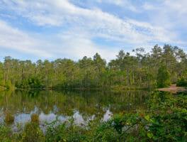 Florida Trail, Weaver Creek