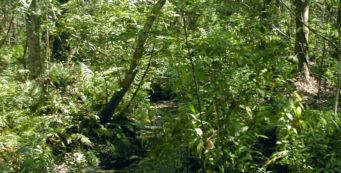 Brooker Creek Preserve Friends Trail