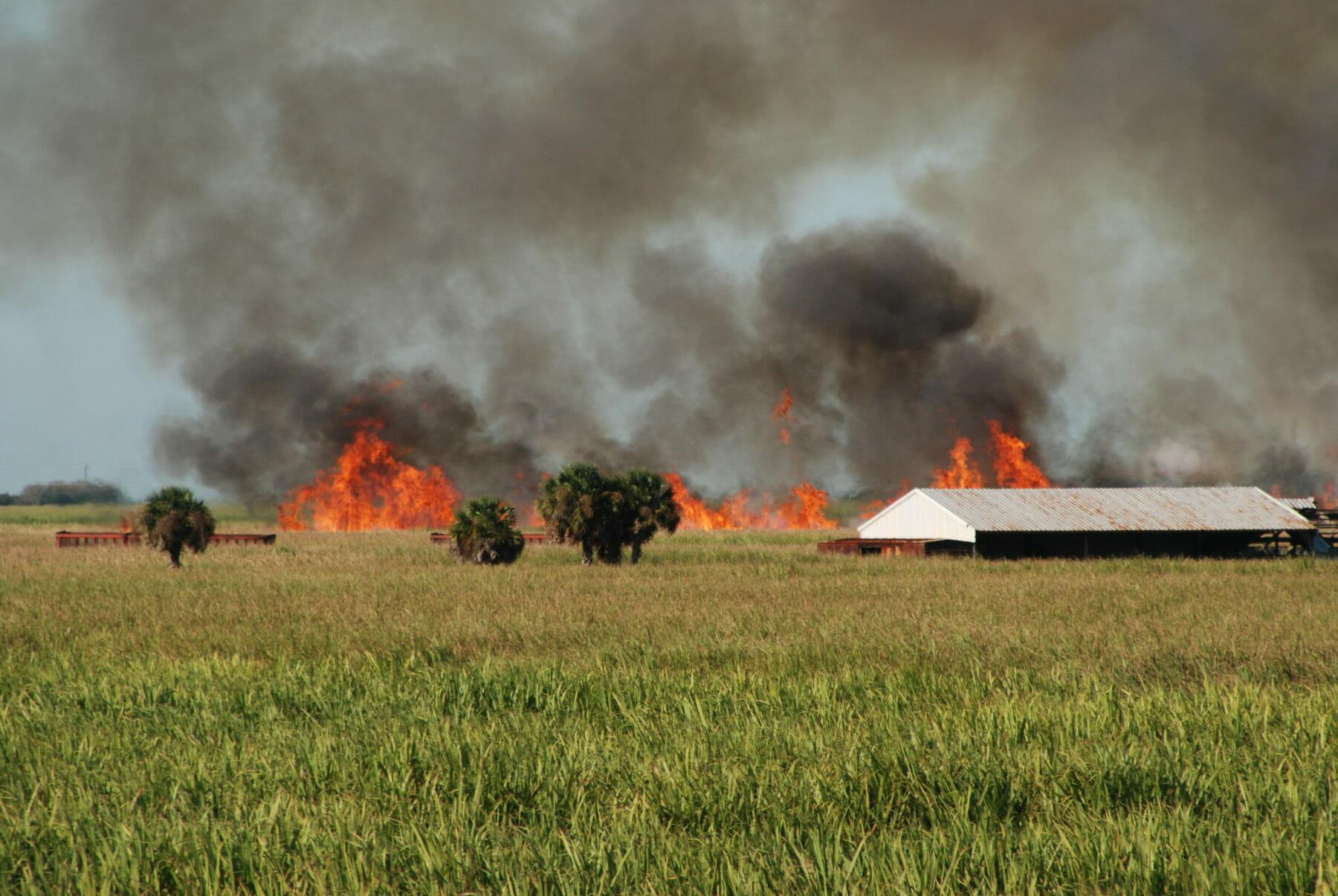 Sugar Cane field aflame