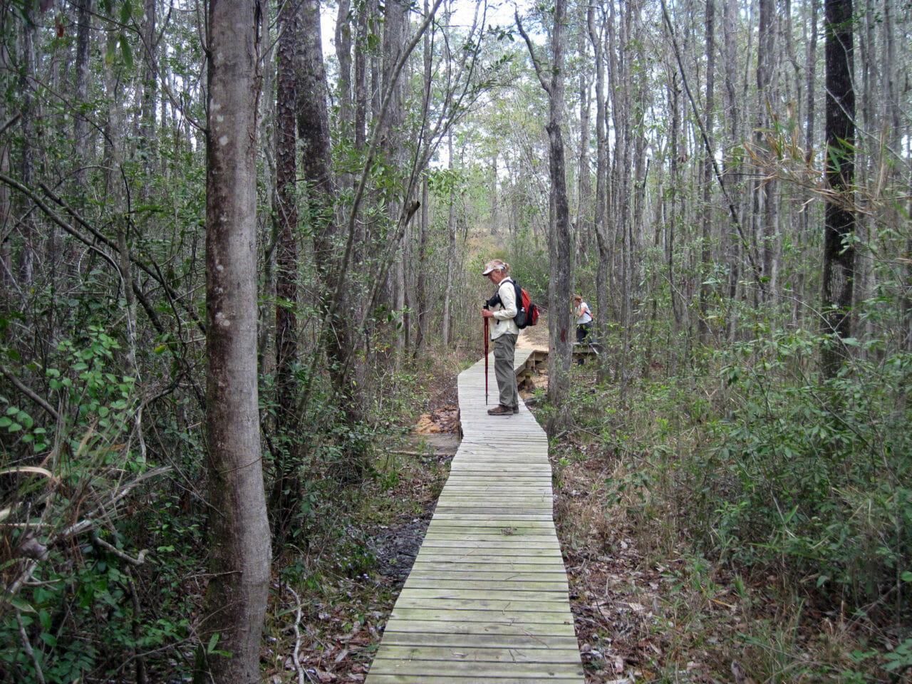 Florida Trail, Jackson Red Ground