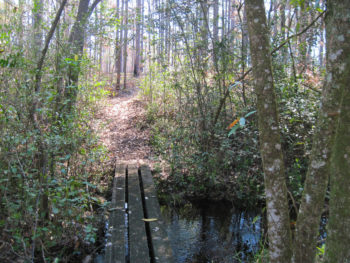 Florida Trail, Wiregrass Trail