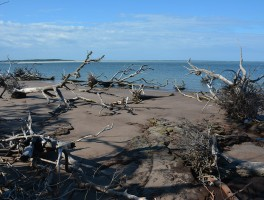 Black Rock Beach on Big Talbot Island
