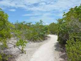 Tidal rock barren at Long Key
