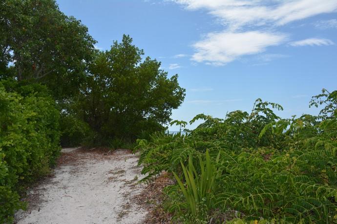 Coastal berm