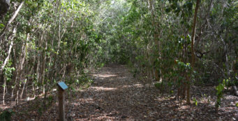 Key Largo Hammock