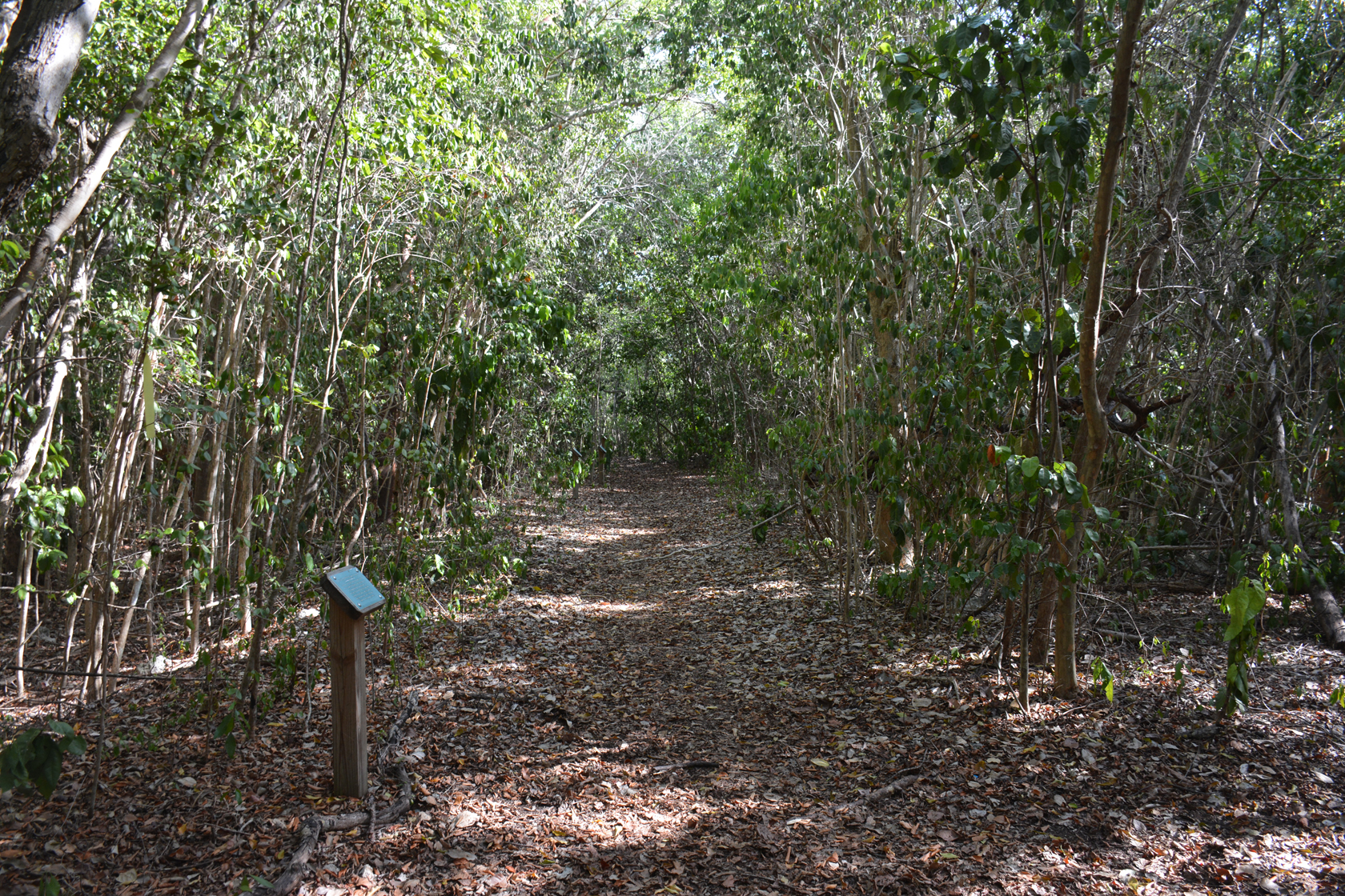 Key Largo Hammock