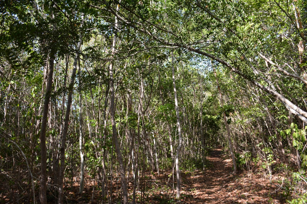 Key Largo Hammock Nature Trail