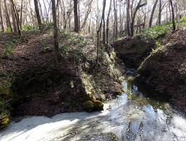 Disappearing Creek at Camp Branch