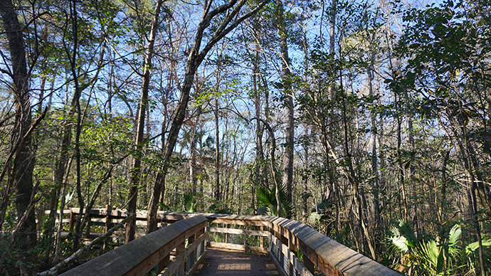 Boardwalk section of the trail