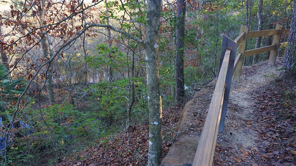 Bluff above Econfina Creek