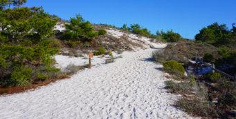 Henderson Beach Nature Trail