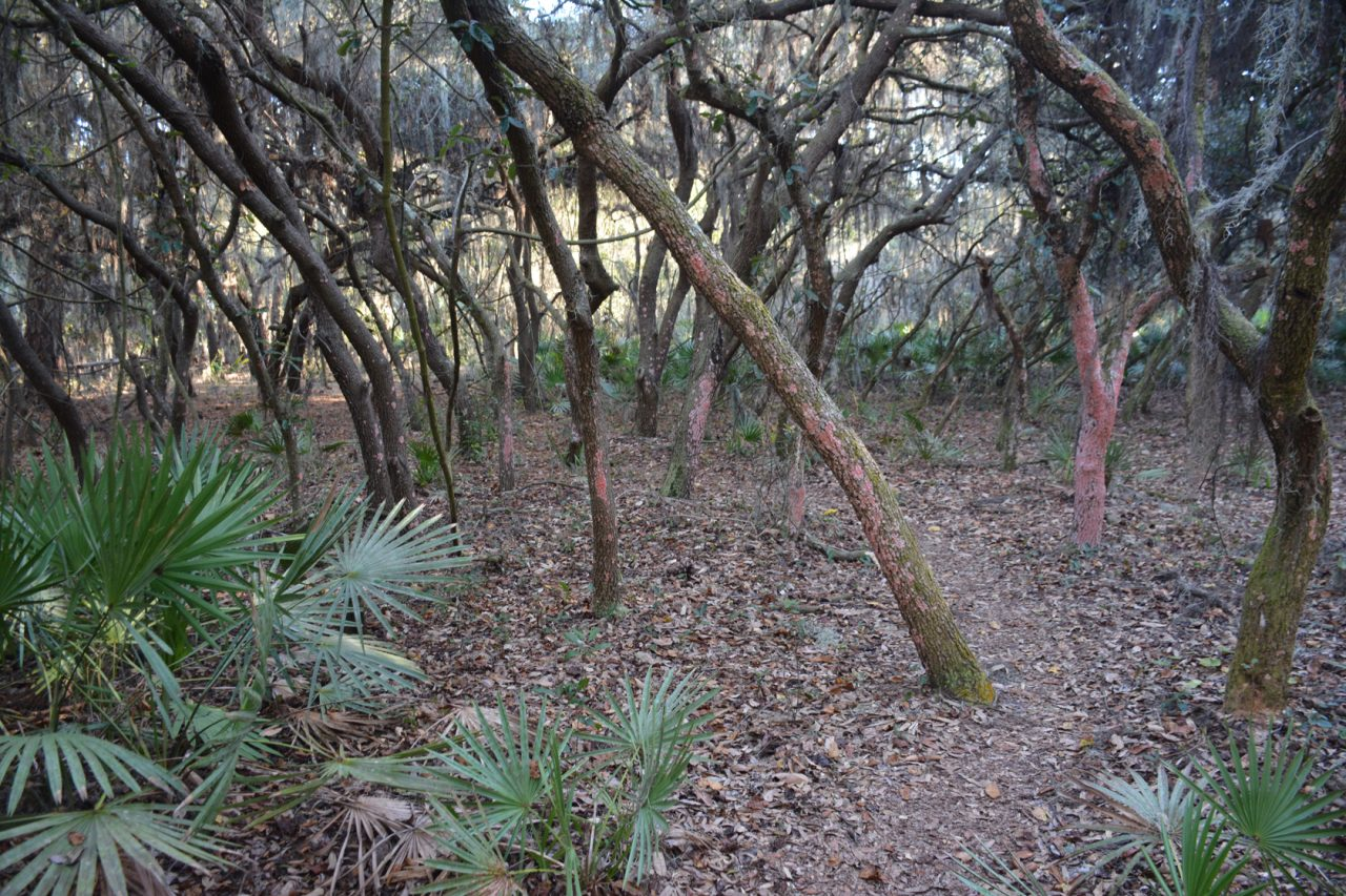 Lakeland Highlands Scrub Shady Oak Trail