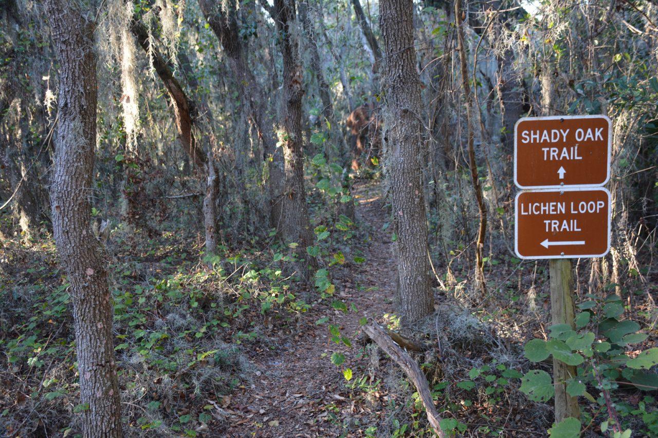 Lakeland Highlands Scrub Lichen Loop
