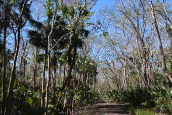 Osprey Trail in Spring Hammock Preserve