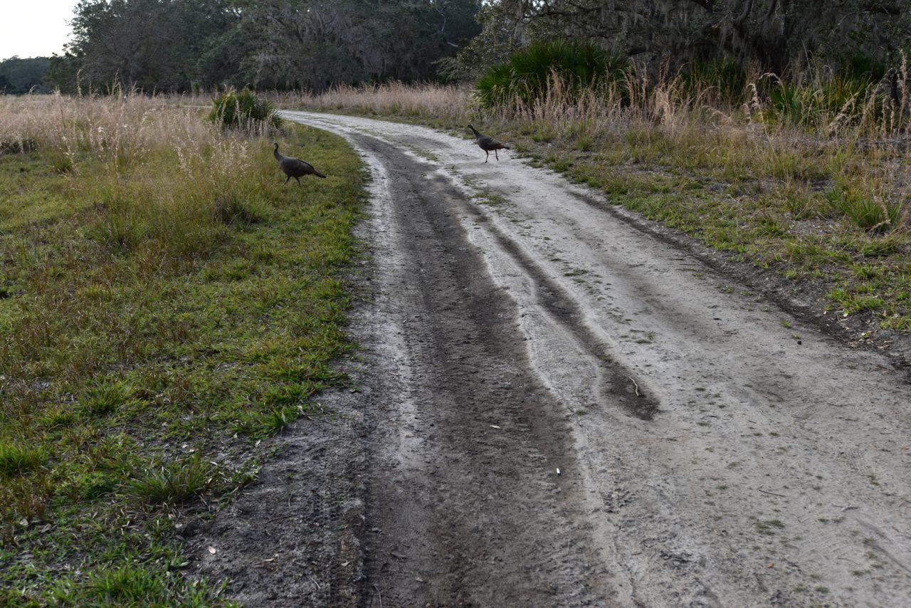 Gobbler Ridge Trail