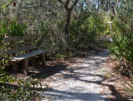Tampa Tribune says Take a Hike
