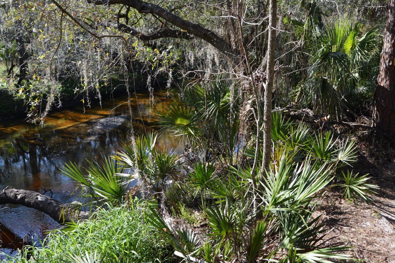 View of the Little Manatee River from the trail
